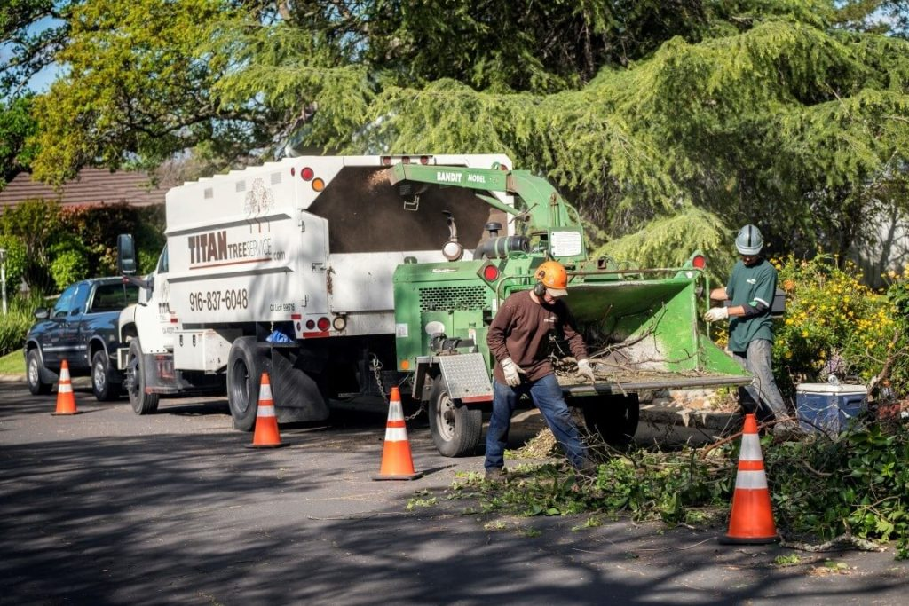 Residential Tree Services-Royal Palm Beach Tree Trimming and Tree Removal Services-We Offer Tree Trimming Services, Tree Removal, Tree Pruning, Tree Cutting, Residential and Commercial Tree Trimming Services, Storm Damage, Emergency Tree Removal, Land Clearing, Tree Companies, Tree Care Service, Stump Grinding, and we're the Best Tree Trimming Company Near You Guaranteed!
