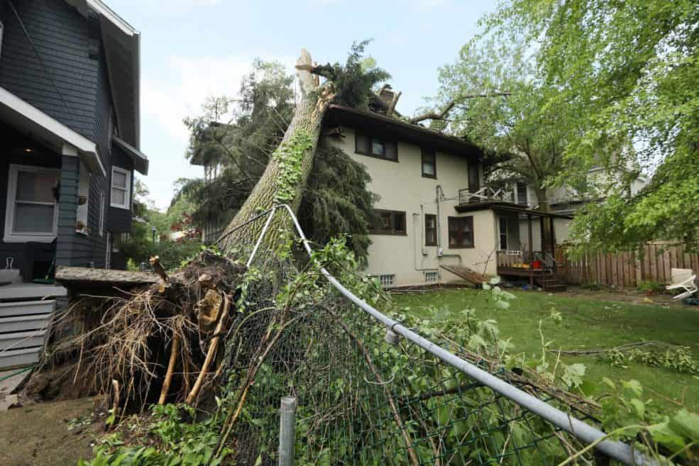 Storm Damage-Royal Palm Beach Tree Trimming and Tree Removal Services-We Offer Tree Trimming Services, Tree Removal, Tree Pruning, Tree Cutting, Residential and Commercial Tree Trimming Services, Storm Damage, Emergency Tree Removal, Land Clearing, Tree Companies, Tree Care Service, Stump Grinding, and we're the Best Tree Trimming Company Near You Guaranteed!