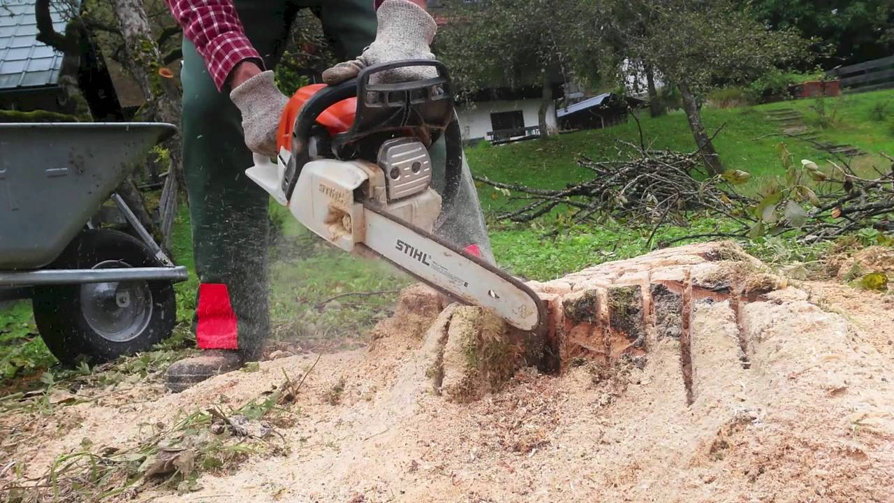 Stump Removal-Royal Palm Beach Tree Trimming and Tree Removal Services-We Offer Tree Trimming Services, Tree Removal, Tree Pruning, Tree Cutting, Residential and Commercial Tree Trimming Services, Storm Damage, Emergency Tree Removal, Land Clearing, Tree Companies, Tree Care Service, Stump Grinding, and we're the Best Tree Trimming Company Near You Guaranteed!