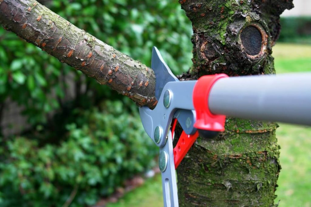 Tree Pruning-Royal Palm Beach Tree Trimming and Tree Removal Services-We Offer Tree Trimming Services, Tree Removal, Tree Pruning, Tree Cutting, Residential and Commercial Tree Trimming Services, Storm Damage, Emergency Tree Removal, Land Clearing, Tree Companies, Tree Care Service, Stump Grinding, and we're the Best Tree Trimming Company Near You Guaranteed!