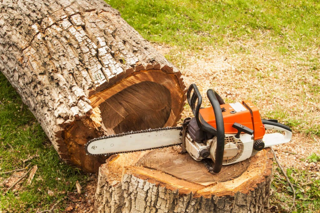 Tree Removal-Royal Palm Beach Tree Trimming and Tree Removal Services-We Offer Tree Trimming Services, Tree Removal, Tree Pruning, Tree Cutting, Residential and Commercial Tree Trimming Services, Storm Damage, Emergency Tree Removal, Land Clearing, Tree Companies, Tree Care Service, Stump Grinding, and we're the Best Tree Trimming Company Near You Guaranteed!