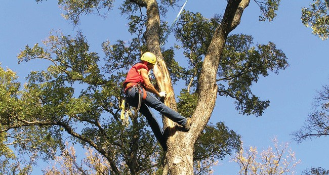 Tree Trimming-Royal Palm Beach Tree Trimming and Tree Removal Services-We Offer Tree Trimming Services, Tree Removal, Tree Pruning, Tree Cutting, Residential and Commercial Tree Trimming Services, Storm Damage, Emergency Tree Removal, Land Clearing, Tree Companies, Tree Care Service, Stump Grinding, and we're the Best Tree Trimming Company Near You Guaranteed!