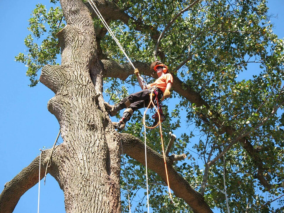 Commercial Tree Services-Royal Palm Beach Tree Trimming and Tree Removal Services-We Offer Tree Trimming Services, Tree Removal, Tree Pruning, Tree Cutting, Residential and Commercial Tree Trimming Services, Storm Damage, Emergency Tree Removal, Land Clearing, Tree Companies, Tree Care Service, Stump Grinding, and we're the Best Tree Trimming Company Near You Guaranteed!