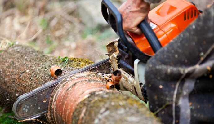 Emergency Tree Removal-Royal Palm Beach Tree Trimming and Tree Removal Services-We Offer Tree Trimming Services, Tree Removal, Tree Pruning, Tree Cutting, Residential and Commercial Tree Trimming Services, Storm Damage, Emergency Tree Removal, Land Clearing, Tree Companies, Tree Care Service, Stump Grinding, and we're the Best Tree Trimming Company Near You Guaranteed!