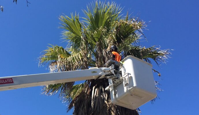 Palm Tree Trimming & Palm Tree Removal-Royal Palm Beach Tree Trimming and Tree Removal Services-We Offer Tree Trimming Services, Tree Removal, Tree Pruning, Tree Cutting, Residential and Commercial Tree Trimming Services, Storm Damage, Emergency Tree Removal, Land Clearing, Tree Companies, Tree Care Service, Stump Grinding, and we're the Best Tree Trimming Company Near You Guaranteed!