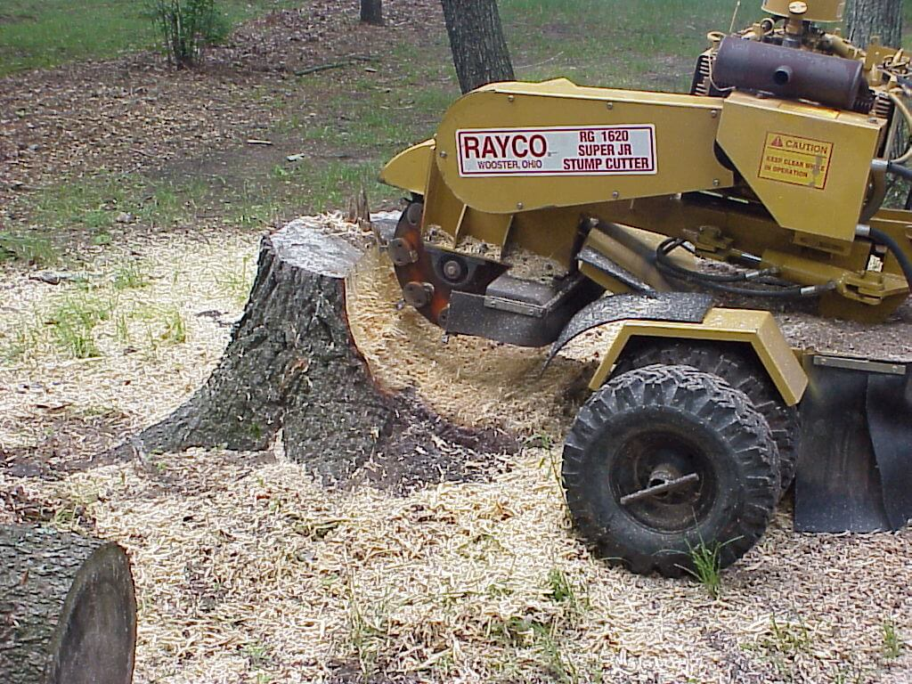 Stump Grinding-Royal Palm Beach Tree Trimming and Tree Removal Services-We Offer Tree Trimming Services, Tree Removal, Tree Pruning, Tree Cutting, Residential and Commercial Tree Trimming Services, Storm Damage, Emergency Tree Removal, Land Clearing, Tree Companies, Tree Care Service, Stump Grinding, and we're the Best Tree Trimming Company Near You Guaranteed!