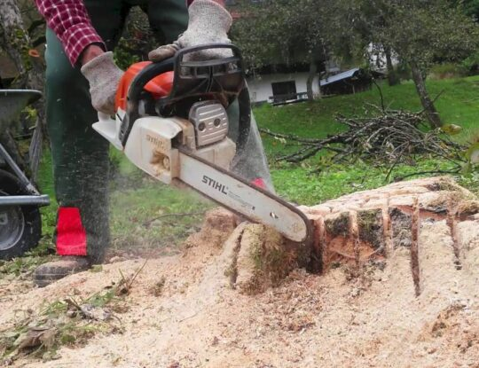 Stump Grinding & Removal-Royal Palm Beach Tree Trimming and Tree Removal Services-We Offer Tree Trimming Services, Tree Removal, Tree Pruning, Tree Cutting, Residential and Commercial Tree Trimming Services, Storm Damage, Emergency Tree Removal, Land Clearing, Tree Companies, Tree Care Service, Stump Grinding, and we're the Best Tree Trimming Company Near You Guaranteed!