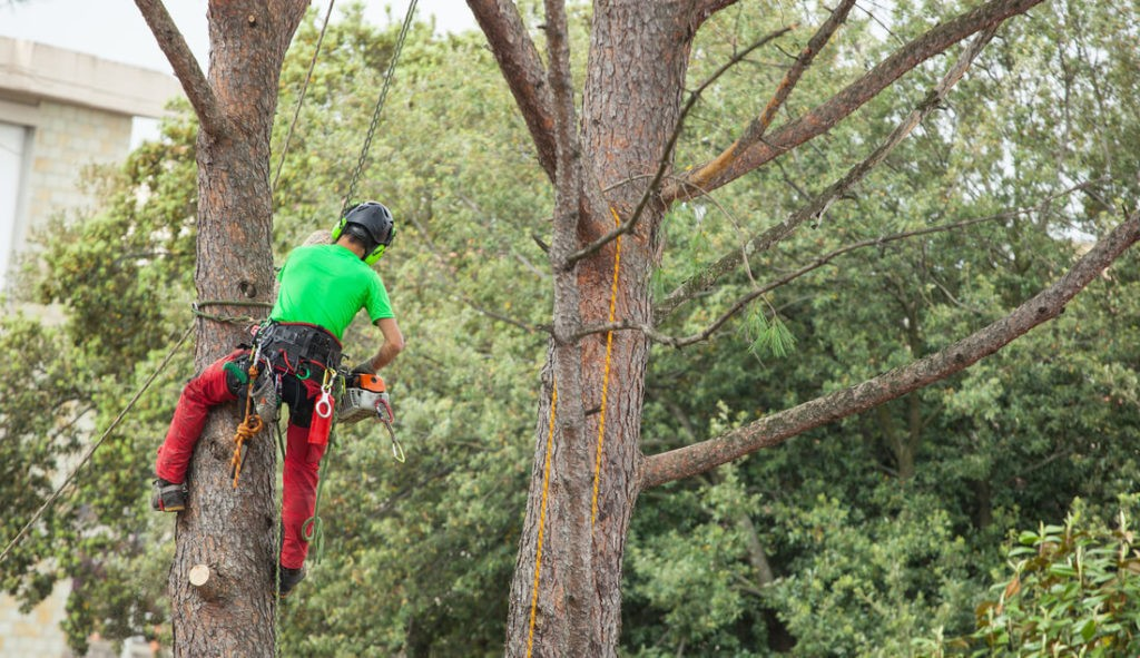 Tree Assessments-Royal Palm Beach Tree Trimming and Tree Removal Services-We Offer Tree Trimming Services, Tree Removal, Tree Pruning, Tree Cutting, Residential and Commercial Tree Trimming Services, Storm Damage, Emergency Tree Removal, Land Clearing, Tree Companies, Tree Care Service, Stump Grinding, and we're the Best Tree Trimming Company Near You Guaranteed!