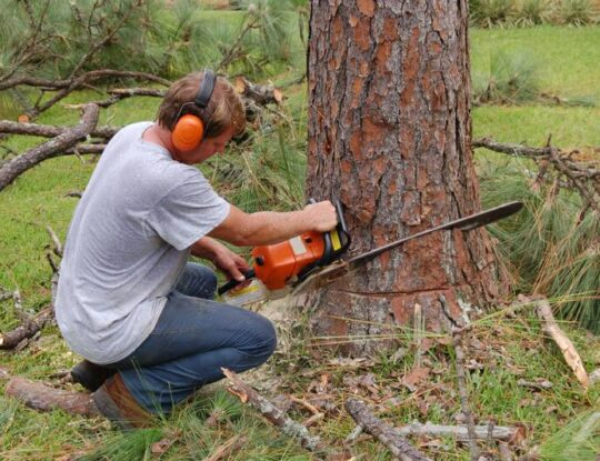 Tree Cutting-Royal Palm Beach Tree Trimming and Tree Removal Services-We Offer Tree Trimming Services, Tree Removal, Tree Pruning, Tree Cutting, Residential and Commercial Tree Trimming Services, Storm Damage, Emergency Tree Removal, Land Clearing, Tree Companies, Tree Care Service, Stump Grinding, and we're the Best Tree Trimming Company Near You Guaranteed!