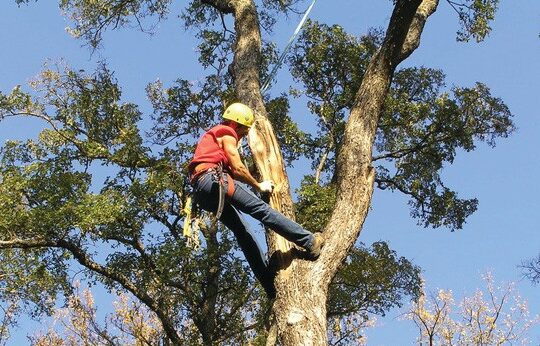 Tree Trimming Services-Royal Palm Beach Tree Trimming and Tree Removal Services-We Offer Tree Trimming Services, Tree Removal, Tree Pruning, Tree Cutting, Residential and Commercial Tree Trimming Services, Storm Damage, Emergency Tree Removal, Land Clearing, Tree Companies, Tree Care Service, Stump Grinding, and we're the Best Tree Trimming Company Near You Guaranteed!